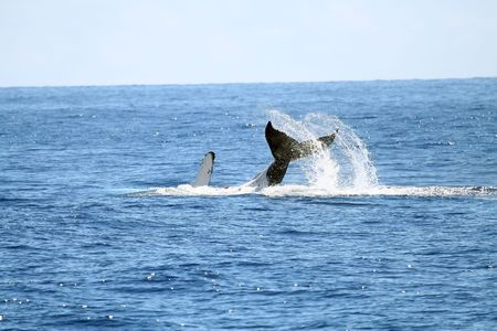 whale playing with its tail out photo