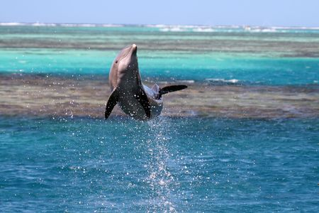 dolphin jumping over a turquoise lagoon Stock Photo