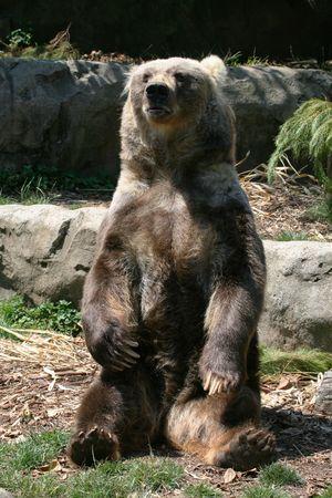 brown bear sitting on rocks