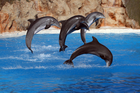 happy dolphins jumping out of the water Stock Photo