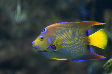 neon fish: colorful yellow, blue, green neon coral fish
