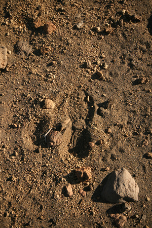 foot step: uomo piedi passo in un deserto di sabbia