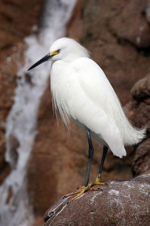 beack: proud crane standing on rocks