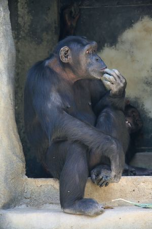 monkey thinking seated in a cave Stock Photo
