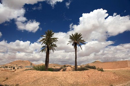 oasis and palm trees in tunisian desert Standard-Bild