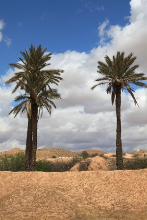 two palm trees in an african desert Stock Photo - 7133870