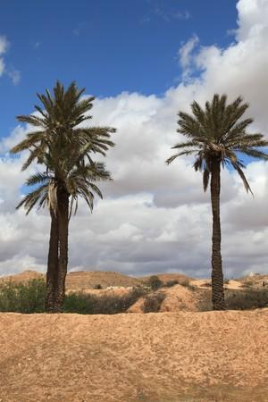 two palm trees in an african desert Standard-Bild