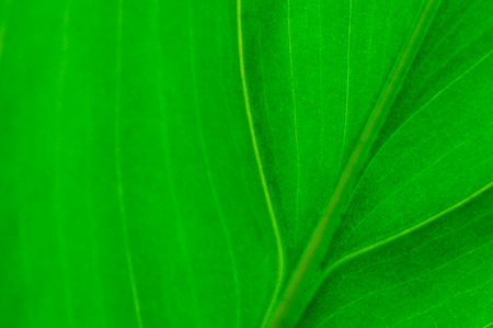 Close up of green leaf for background. Soft focus. Copy space for text. Banco de Imagens