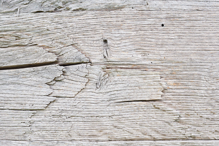Old white oak wood for background or old grey wooden texture. Old oak for vintage table or furniture texture. Surface eroded by time. More than a hundred years old wood. Old wood background. Close up.
