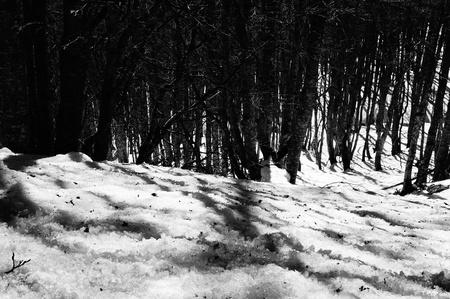 white winter: Winter landscape - black and white