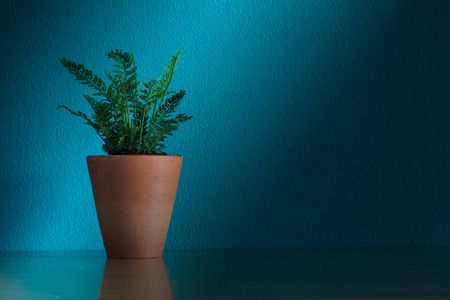 tabel: House Plant on tabel Stock Photo