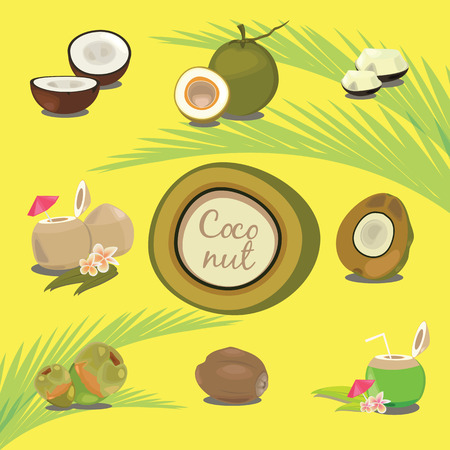 palmetto: Set of Products of Coconut