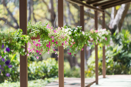 hanging basket: Pretty pink and purple flowers in hanging basket Stock Photo