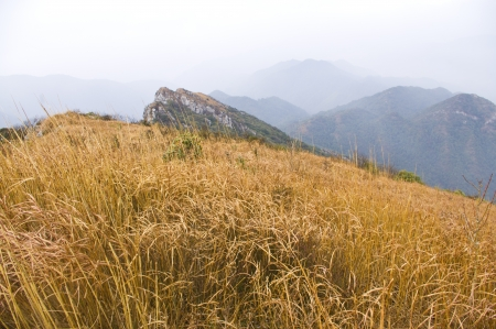 mountaintop with yellow grass at south china Stock Photo - 16952650