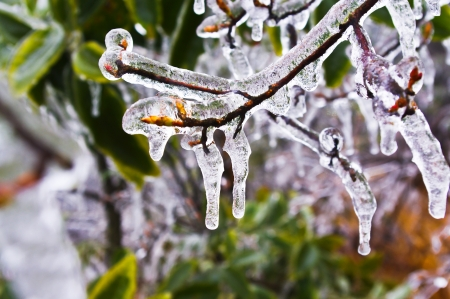 cropland: ice on leaves after great snow at chinese south pro Guangdong