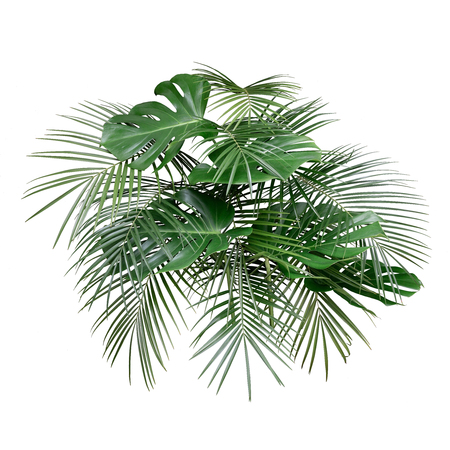 Trendy monstera and tropical palm leaves layout precisely isolated on white background. Side arrangement night bouquet view.