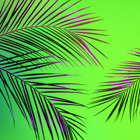 Creative tropical palm leaves arrangement lit with proton purple and ufo green light. Summer rave night party creative concept. Vivid colors square background.