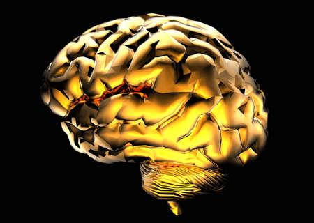 黄金の脳 写真素材