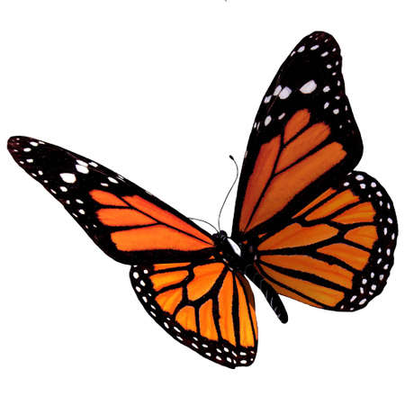 rendering: Isolated Butterfly