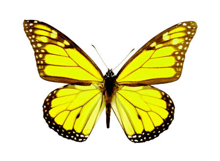 Isolated Butterfly photo