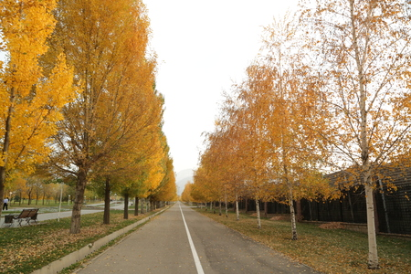 park of Almaty Stock Photo