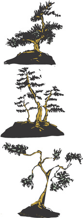 Three scratch board images of Japanese bonsai trees. Stock Illustratie