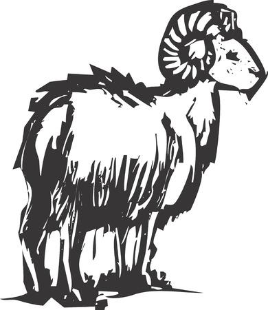 borrego cimarron: Un gran cuerno de oveja a partir de una monta�a en el oeste.