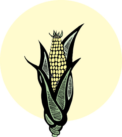 cob: Ear of corn depicted in the style of woodcut.