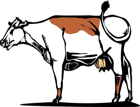 Vache laitière avec une tache brune sur le dos. Banque d'images - 5488453