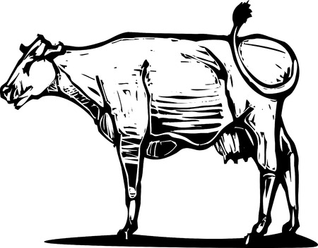 graze: Woodcut style image of a common dairy cow. Illustration