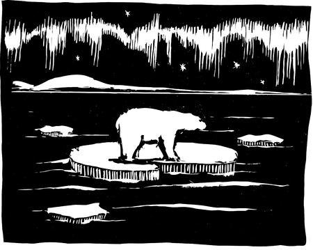 ice:  Polar bear in Arctic on ice flow.