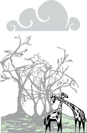 Twee giraffen onder een boom in de ochtendmist.