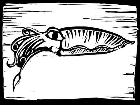 retro woodcut image of a cuttle fish as part of an aquatic series.