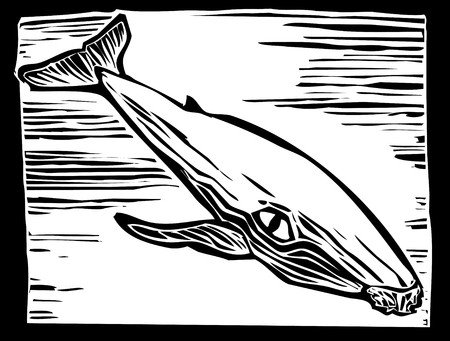 Woodcut vintage style image of a humpback whale. Vector
