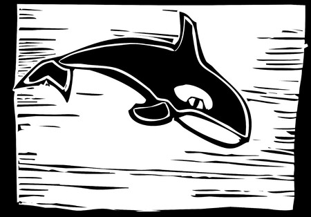 Woodcut vintage style image of a killer whale. Vector