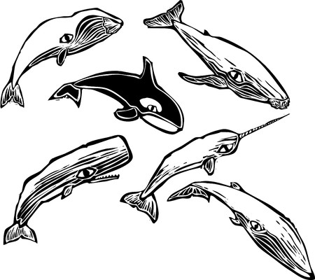 Woodcut vintage style image of a group of different whales.