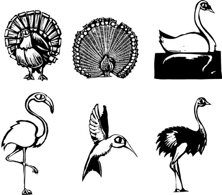 ostrich: Woodcut style group of different birds