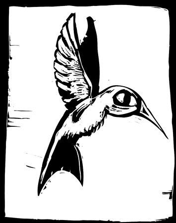 Woodcut of a hummingbird in flight. Illustration