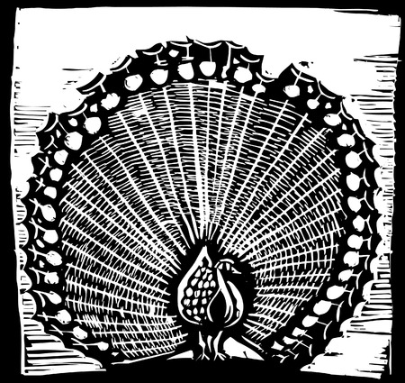 Woodcut style peacock spreading its plumes.