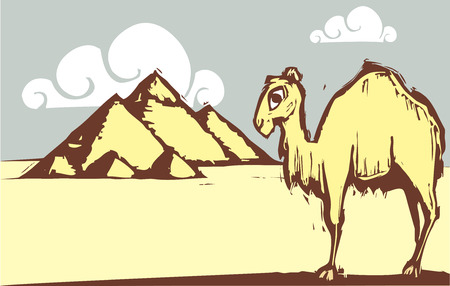 Single hump camel in woodcut style by pyramids. Vector