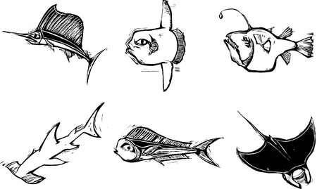varied: Grouping of varied salt water fish and sharks. Illustration