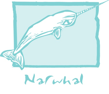 Woodcut vintage style image of a narwhal whale. Vector