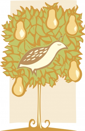 Twelve days of Christmas with Partridge in a pear tree  Vector