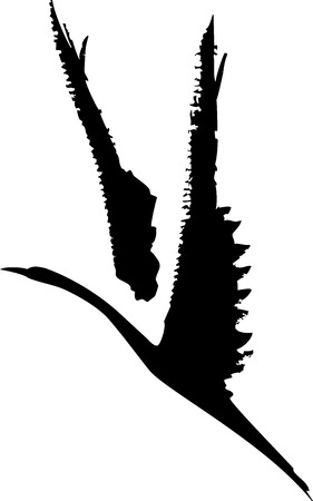 albatross: Ink wash style image of a bird in flight