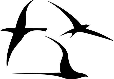 albatross: Set of streamlined birds Illustration
