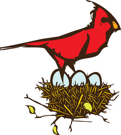 home birth: Woodcut style image of a Cardinal with a nest of eggs