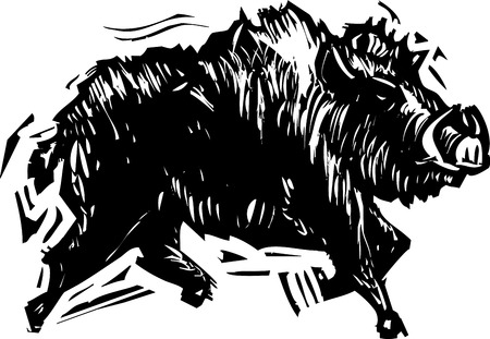 tusks: Woodcut style image of a wild boar with tusks. Illustration