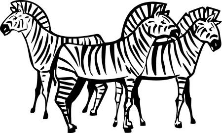 Three African Zebras grouped in a Herd Иллюстрация