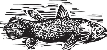 fossil: Imagen de estilo de grabado de un celacanto el pez f�sil viviente.