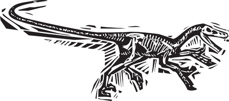 velociraptor: Woodcut style image of a fossil of a running Velociraptor dinosaur Illustration